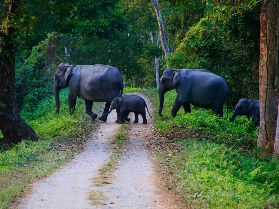 Kerala-Wildlife-Tour