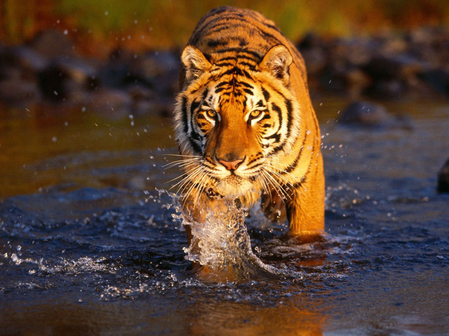Wilderness-Rajasthan-Tour