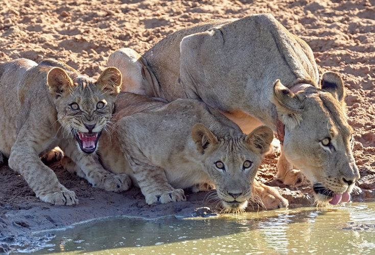 Wild Life Tourism in India